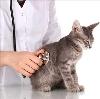 Ветеринарные клиники в Фурманово